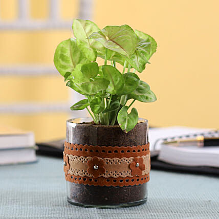 Indoor Plant with Decorated Pot Online