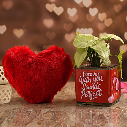 Syngonium Plant In Forever With You Vase & Red Heart:Soft toys to Hyderabad