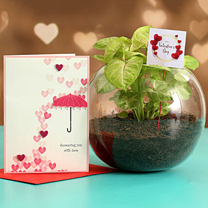 Syngonium Plant In Glass Vase With Greeting Card & V-Day Tag Hand Delivery
