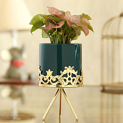 Syngonium Plant In Green Pot With Golden Stand
