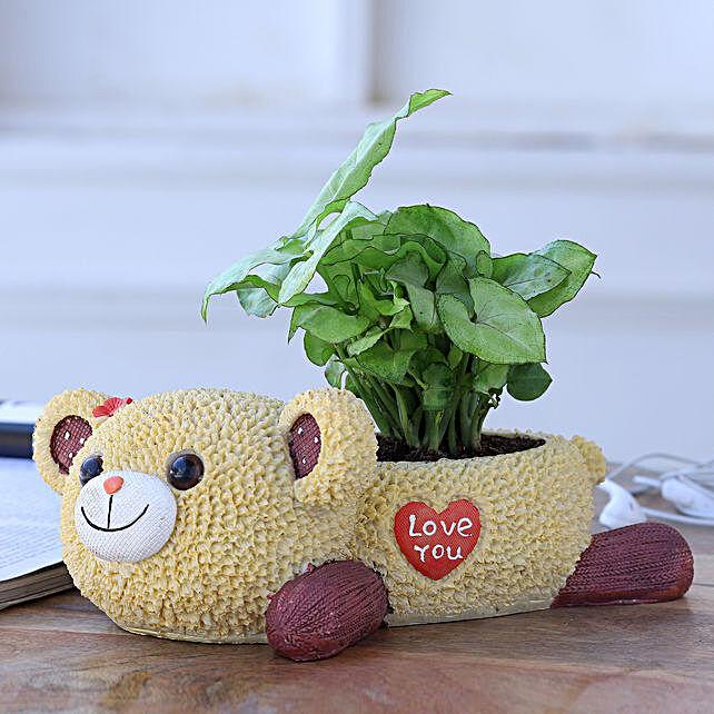 Syngonium Plant In Love You Bear Ceramic Pot
