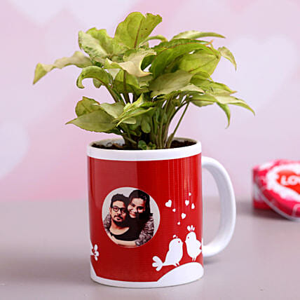 Syngonium Plant In Personalised Love Birds Mug Hand Delivery