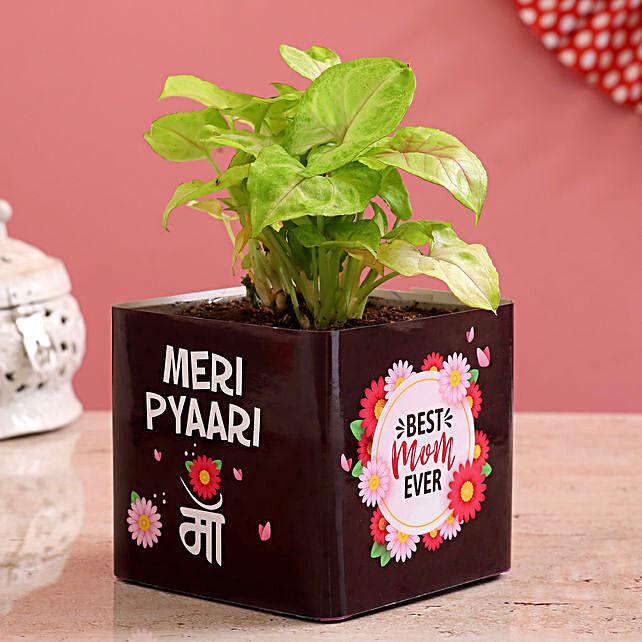 Syngonium Plant In Pyari Maa Vase