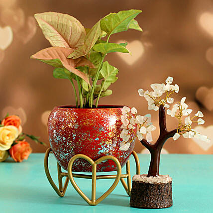Syngonium Plant In Red Glittery Pot Wish Tree
