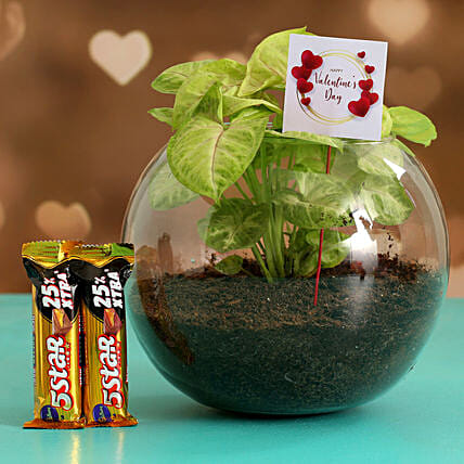 Syngonium Plant In Round Glass Vase & Five Star Chocolates Hand Delivery