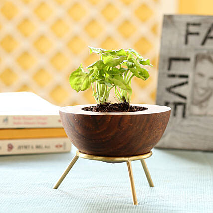 Small Indoor Plant with Stand Online