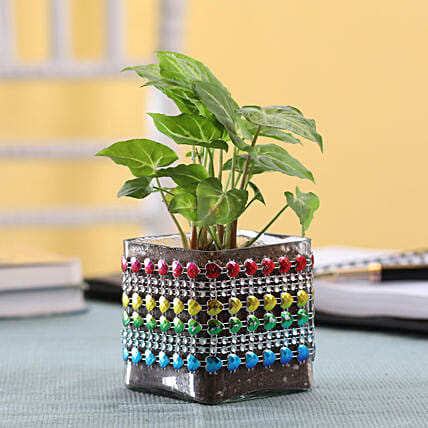 Plant In Decorated Pot
