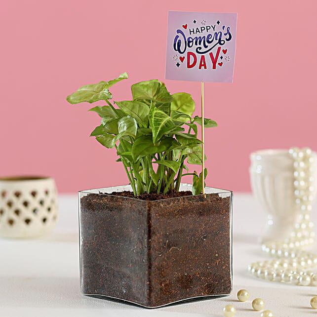 Indoor Plant For Women's Day Online