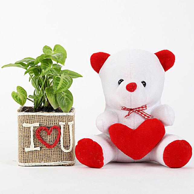Plant with Teddy Combo:Plants N Teddy Bears