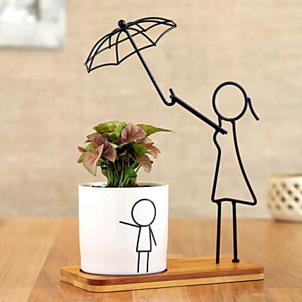 Syngonium Plant In White Pot With Cute Umbrella Stand