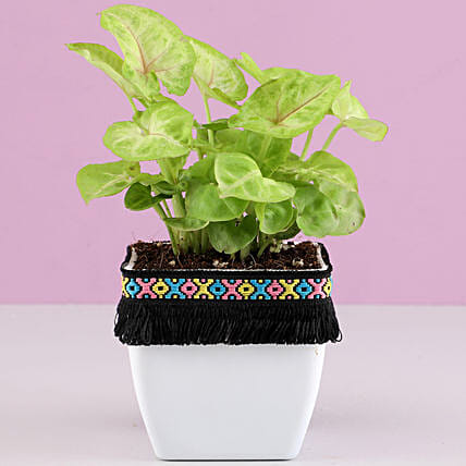 Small Plant with Planter For Her:Lucky Plants For Home