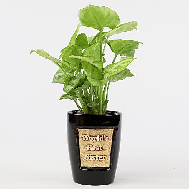 syngonium plant in printed pot for sister