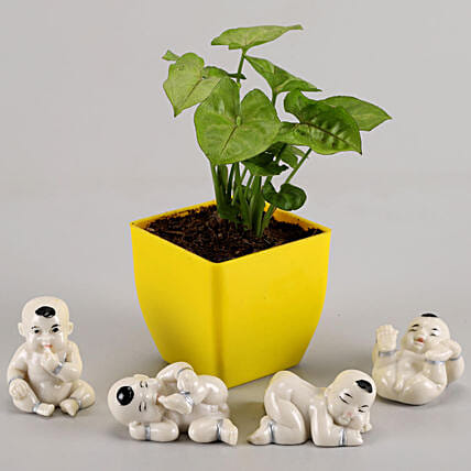 syngonium plant in yellow pot with show piece