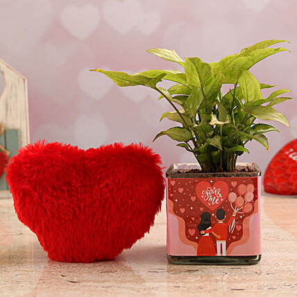 Syngonium Plant In You N Me Vase & Red Heart:Soft Toys for Birthday