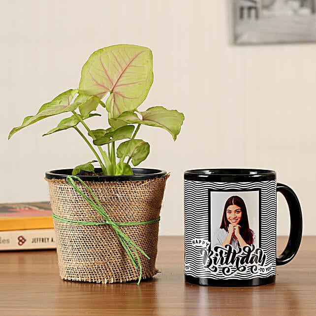 syngonium plant with bday mug online