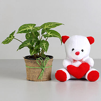 Plant and cute Teddy Combo  for valentine