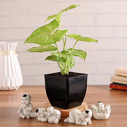 Syngonium Plant With Cute Baby Buddha Figurines:Plants Delivery
