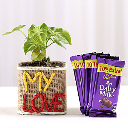 Love Plant and Chocolate Combo