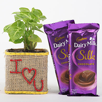 Love Printed Pot Plant N Chocolate