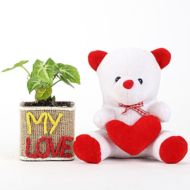 Cute Teddy N Plant Pot Online