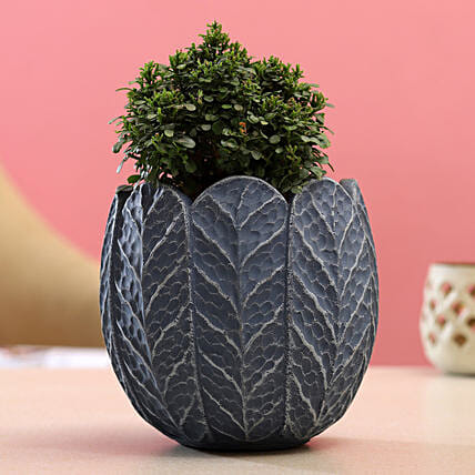 Table Kamini Plant In Blue Grey Ceramic Pot