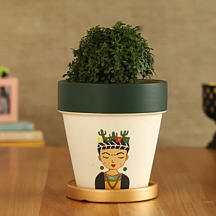 Table Kamini Plant In Girl Printed Gold Plate Pot