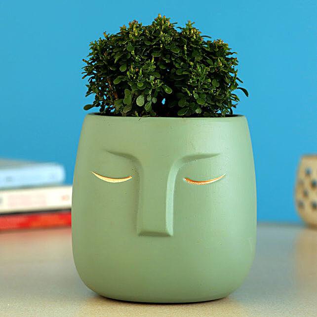 Table Kamini Plant In Green Ceramic Face Pot