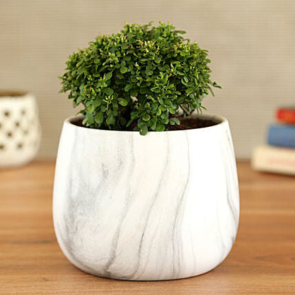 Table Kamini Plant In White Black Marble Pot