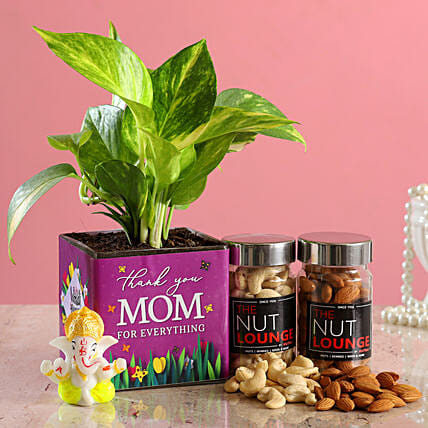 Thank U Mom Money Plant And Dry Fruits Hamper