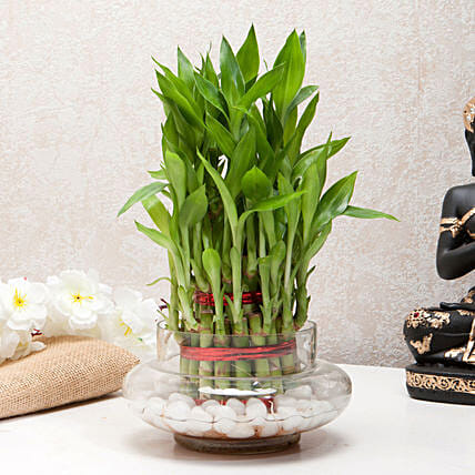 Three layer bamboo in a round glass potpourri vase with white pebbles:Desktop Plant
