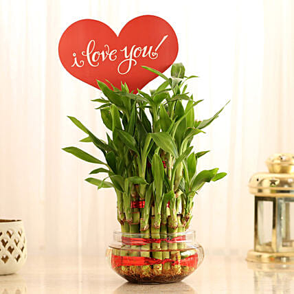 Bamboo for Valentines Gift