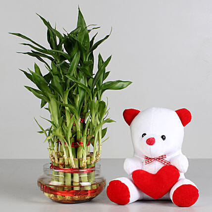 Teddy N Plant Combo for Valentine