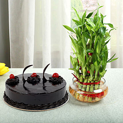 3 Layer Bamboo with Cake:Cakes N Plants