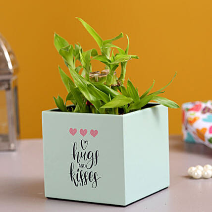 Two Layer Bamboo In Hugs Kisses Pot