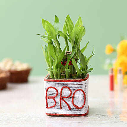 Online Bamboo Plant For Brother:Bhaubij Gift For Brother