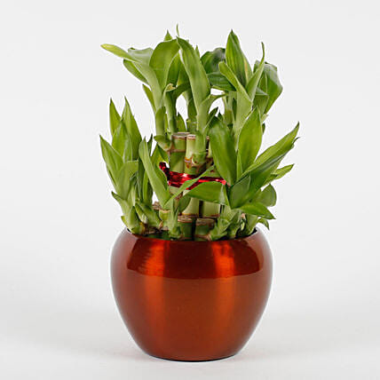 bamboo plant in brass metal pot:Desktop Plant