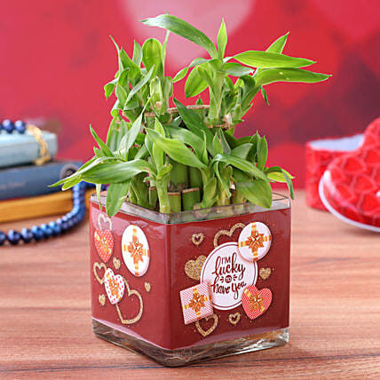 Lucky Bamboo in Valentines Glass Vase
