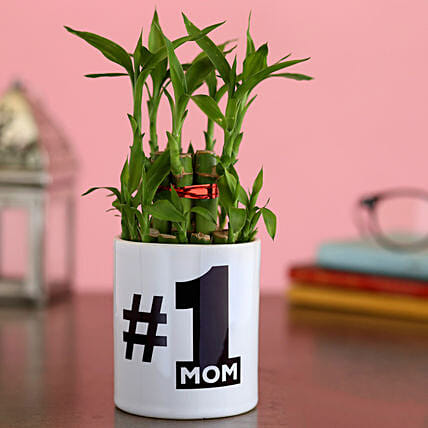 Two Layer Bamboo Plant In No 1 Mom Planter