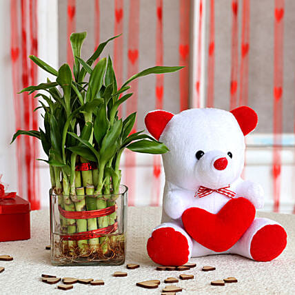 Bamboo Plant and Teddy Combo  for valentine:Soft Toys for Birthday