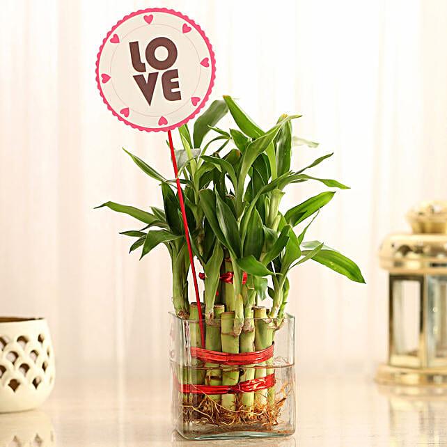 Valentine Love bamboo plant