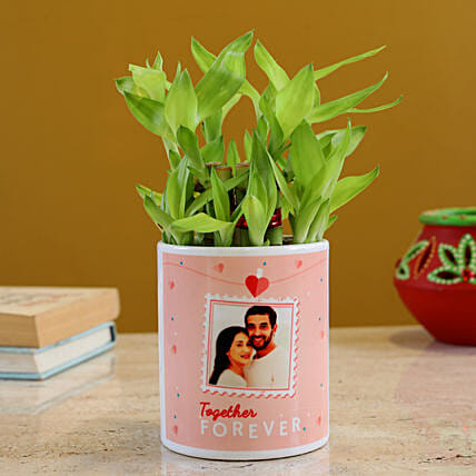 Two Layer Lucky Bamboo In Personalised Planter
