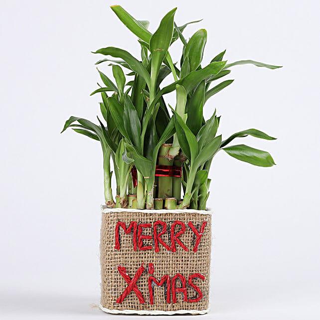 Christmas wishing vase with plant