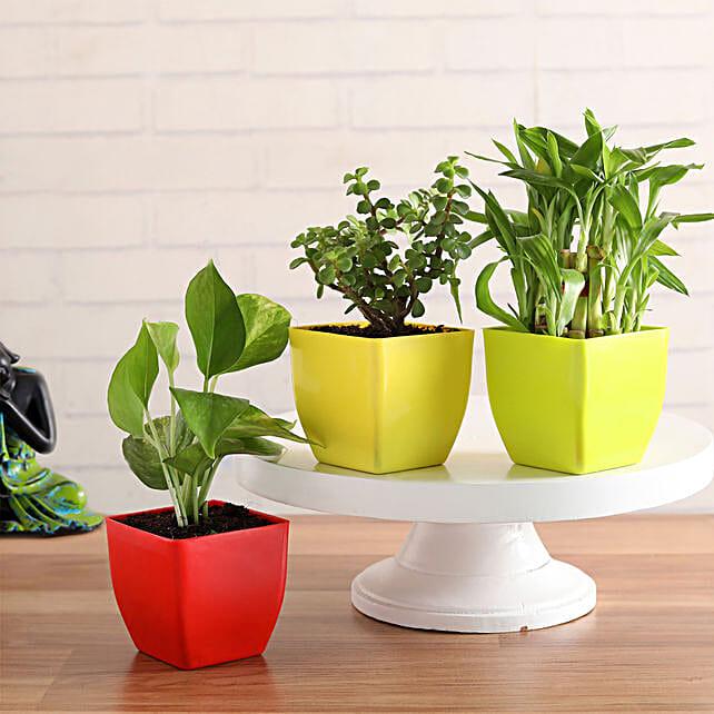 3 Plants Combo Online
