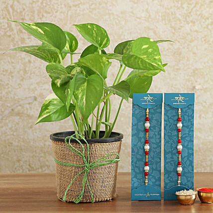 Two Pearl Rakhis With Money Plant Combo