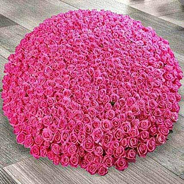 1000 Dark Pink Roses