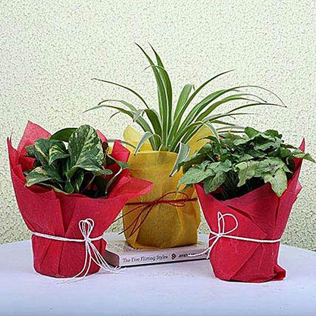 3 Green House Plants