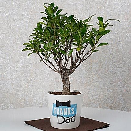 Fathers Day Special Ficus Bonsai Plant