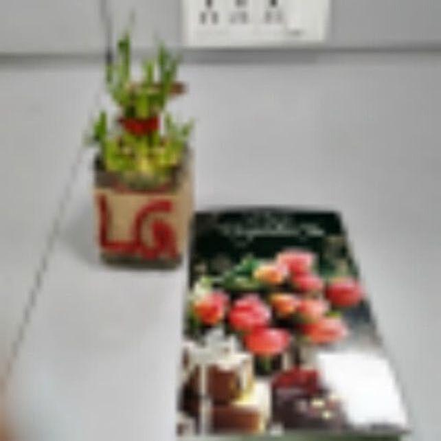 Lge Plant Product