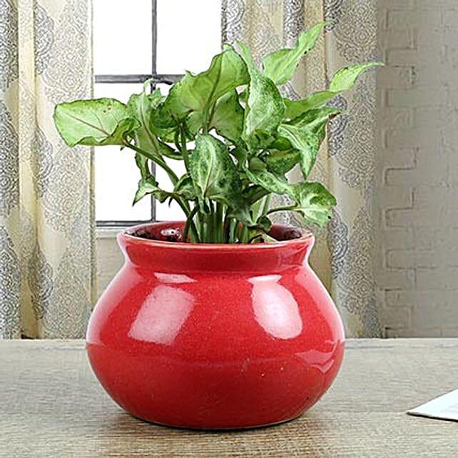 Syngonium Plant With Red Ceramic Vase