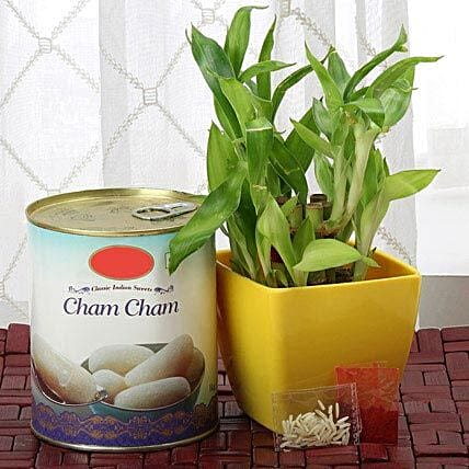 Combo of sweets, lucky bamboo in a planter and roli chawal:Send Bhai Dooj Combos